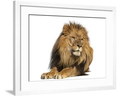 Lion Lying Down, Looking Away, Panthera Leo, 10 Years Old, Isolated on White-Life on White-Framed Photographic Print