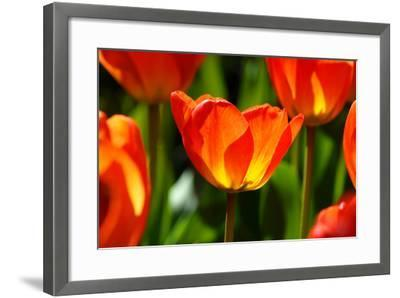 Spring Bling-pudding-Framed Photographic Print