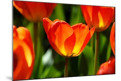 Spring Bling-pudding-Mounted Photographic Print