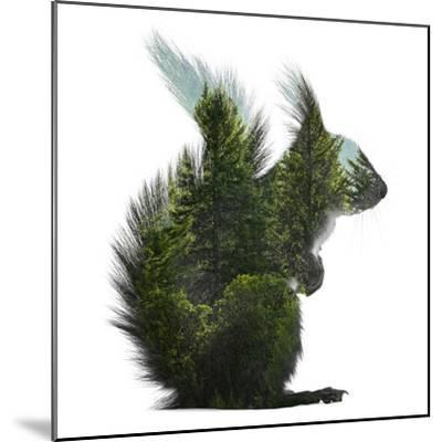 Forest - Squirrel - Silhouette--Mounted Photographic Print