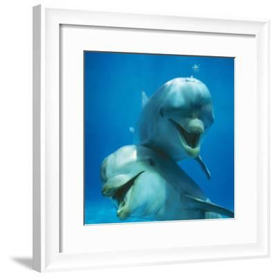 Bottlenose Dolphin Two Facing Camera-Augusto Leandro Stanzani-Framed Photographic Print