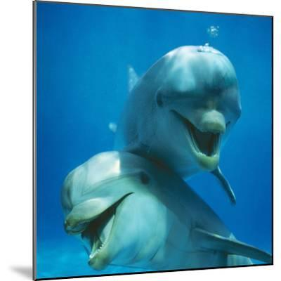 Bottlenose Dolphin Two Facing Camera-Augusto Leandro Stanzani-Mounted Photographic Print