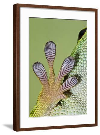 Day Gecko Close Up of Foot--Framed Photographic Print