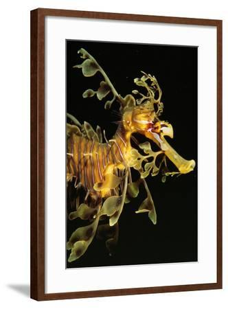 Seahorse--Framed Photographic Print