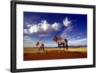 Gemsbok--Framed Photographic Print