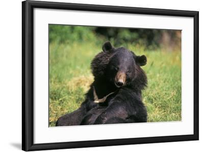 Asiatic Black--Framed Photographic Print