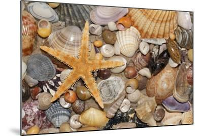 Atlantic Mixed Shells and Starfish on Beach--Mounted Photographic Print