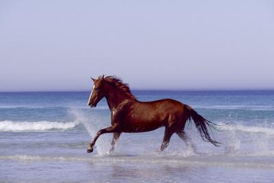 Horse Trotting Through Waves in Sea--Photographic Print