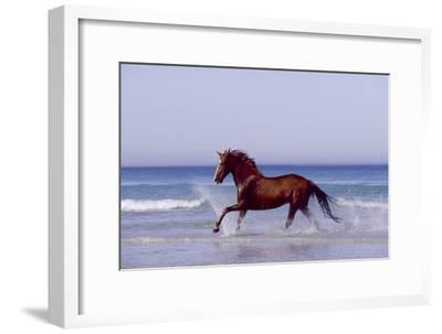 Horse Trotting Through Waves in Sea--Framed Photographic Print