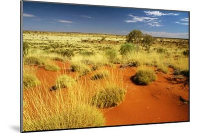 Little Sandy Desert Western Australia--Mounted Photographic Print