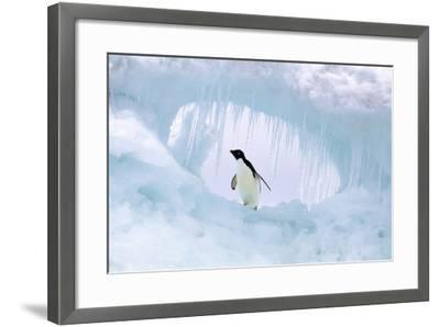 Adelie Penguin--Framed Photographic Print