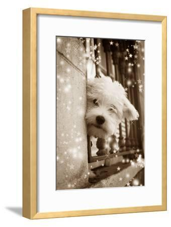 Peering Out of Window--Framed Photographic Print