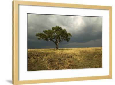 Africa Savannah--Framed Photographic Print
