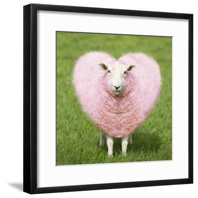 Sheep Ewe Pink Heart Shaped Wool--Framed Photographic Print