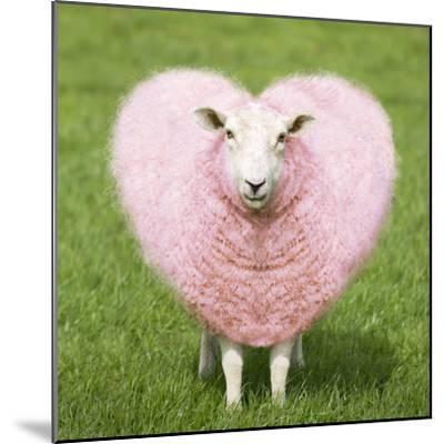 Sheep Ewe Pink Heart Shaped Wool--Mounted Photographic Print
