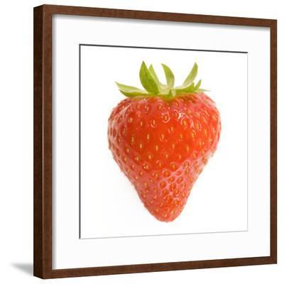 Strawberries Single in Studio--Framed Photographic Print