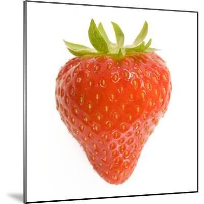 Strawberries Single in Studio--Mounted Photographic Print