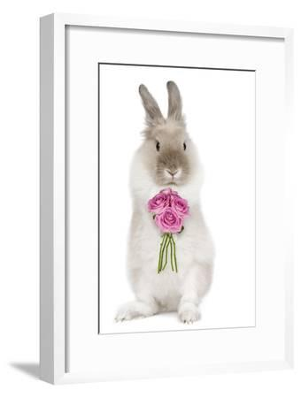 Dwarf Lion-Head Rabbit on Hind Legs Holding Flowers--Framed Photographic Print