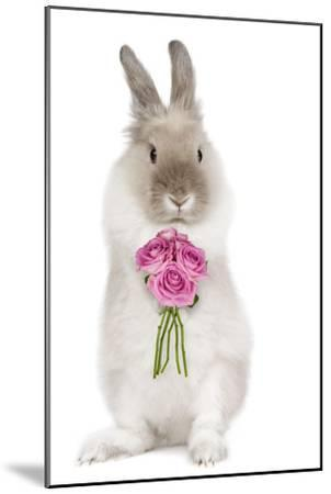Dwarf Lion-Head Rabbit on Hind Legs Holding Flowers--Mounted Photographic Print