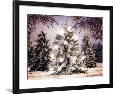 Snow Conifers in Winter Landscape with Christmas Lights--Framed Photographic Print