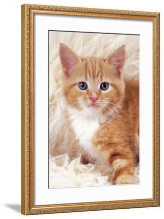 Ginger Kitten, Close-Up on Rug--Framed Photographic Print