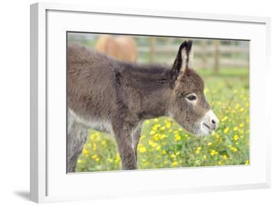 Donkey Baby 5 Days Old--Framed Photographic Print