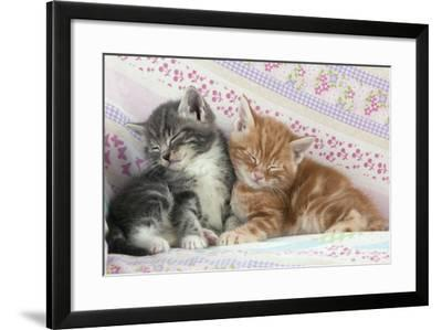 Ginger and Grey Tabby Kittens Sleeping--Framed Photographic Print