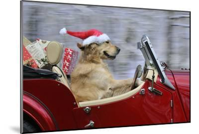 Golden Retriever Dog Wearing Father Christmas--Mounted Photographic Print