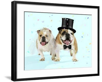 Bulldogs Male and Female--Framed Photographic Print