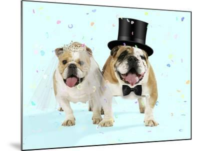 Bulldogs Male and Female--Mounted Photographic Print