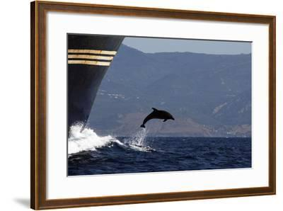 Bottlenose Dolphin Playing--Framed Photographic Print