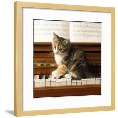 Kitten Playing on Piano--Framed Photographic Print