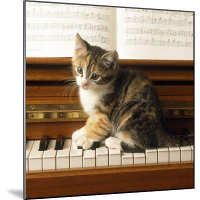 Kitten Playing on Piano--Mounted Photographic Print