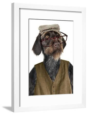 German Wire-Haired Pointer with Hat Glasses--Framed Photographic Print