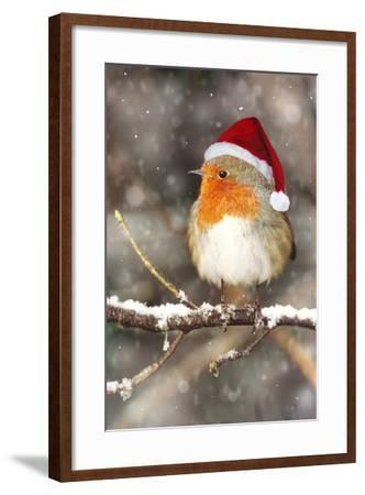 Robin in Falling Snow Wearing Christmas Hat--Framed Photographic Print