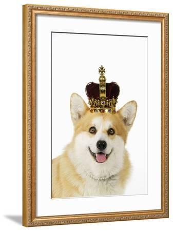 Welsh Corgi Dog Wearing Crown and Pearls--Framed Photographic Print