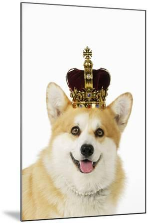 Welsh Corgi Dog Wearing Crown and Pearls--Mounted Photographic Print