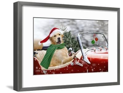 Golden Retriever Driving Car Collecting Christmas Tree--Framed Photographic Print