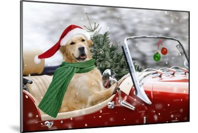 Golden Retriever Driving Car Collecting Christmas Tree--Mounted Photographic Print