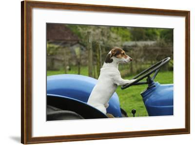 Jack Russell Terrier Sitting on Tractor--Framed Photographic Print