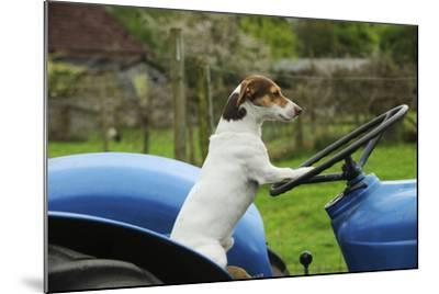 Jack Russell Terrier Sitting on Tractor--Mounted Photographic Print