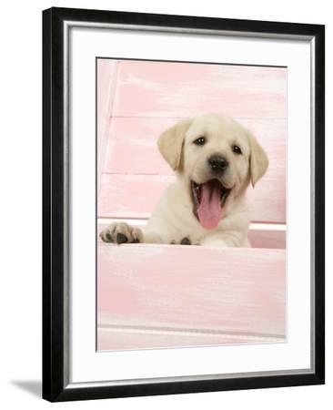 Labrador Retriever Puppy in a Wooden Box--Framed Photographic Print