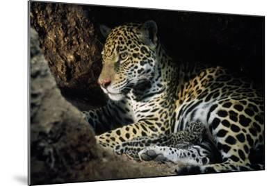 Jaguar Female, with 2 Day Old Cub in Forest Floor--Mounted Photographic Print
