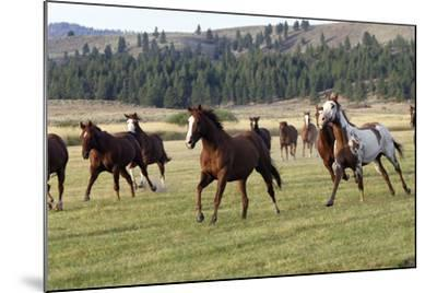 Quarter, Paint Horses Running--Mounted Photographic Print