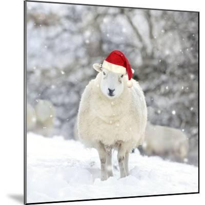 Sheep Texel Ewe in Snow Wearing Christmas Hat--Mounted Photographic Print