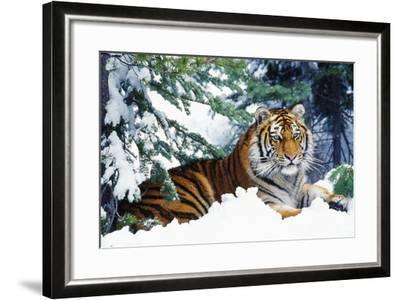 Siberian Tiger Endangered Species--Framed Photographic Print