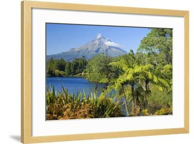 Mount Egmont Lake, Tree Ferns and Perfectly Cone-Shaped--Framed Photographic Print