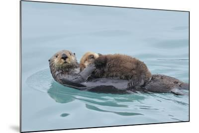 Alaskan Northern Sea Otter Mother Carrying--Mounted Photographic Print