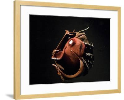 Vampire Squid Going into Opineappleo Defense--Framed Photographic Print