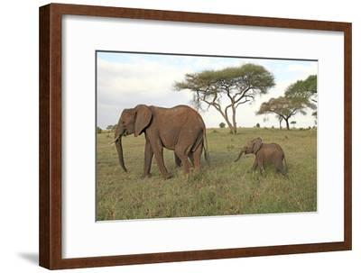 African Elephant Cow and Calf--Framed Photographic Print